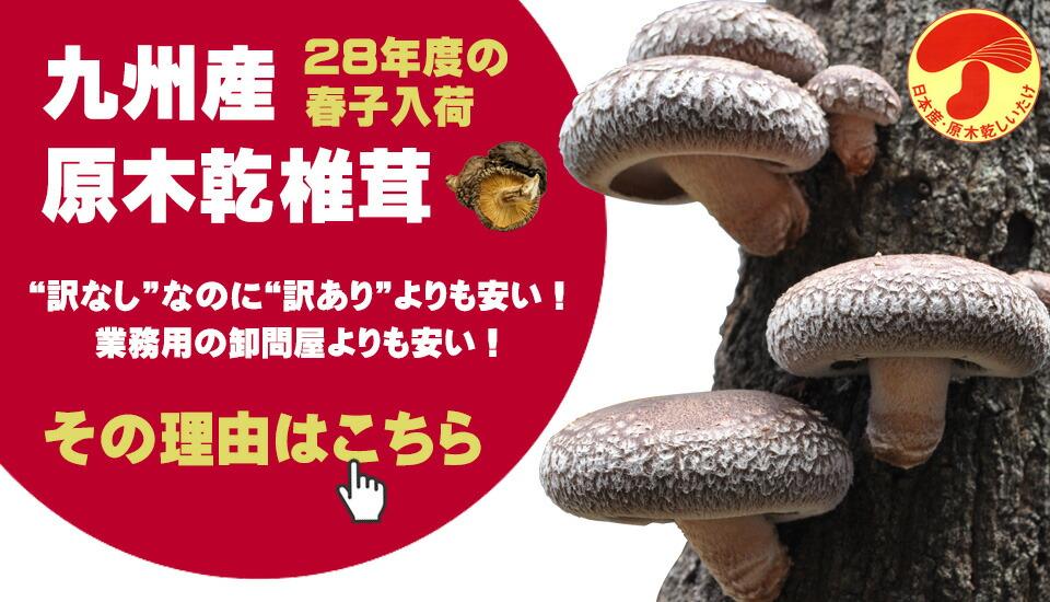 原木乾椎茸