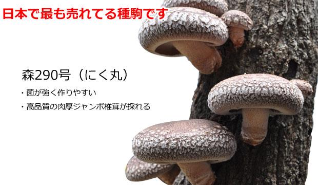 日本一売れてる森産業のシイタケ種駒