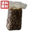 표고버섯 재배 키트 [표고버섯 균 바닥/표고버섯 균 면/버섯 균 면] [평일 15 시 까지의 주문] 자유 연구와 어린이 식 생활 교육으로!