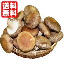 매일 아침 뽑아 생 표고버섯 [생 표고버섯/생 표고버섯/생 표고버섯/무 농약 표고버섯] [평일 15 시 까지의 주문] 완전 무 농약 국산 균 면 생 표고버섯을 놀라운 가격에!