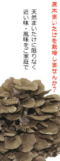 舞茸栽培キット