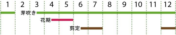 開花カレンダー(レッドロビン)