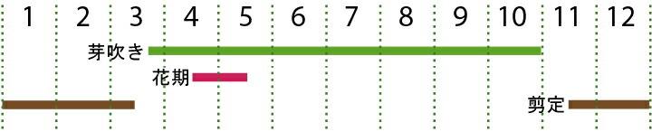 開花カレンダー  プリペット