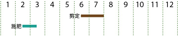 開花カレンダー  ラカンマキ