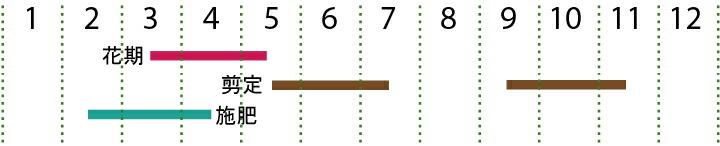 開花カレンダー(ウバメガシ)