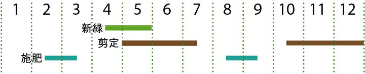 開花カレンダー(クロマツ)