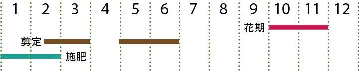 開花カレンダー(ヒイラギモクセイ)