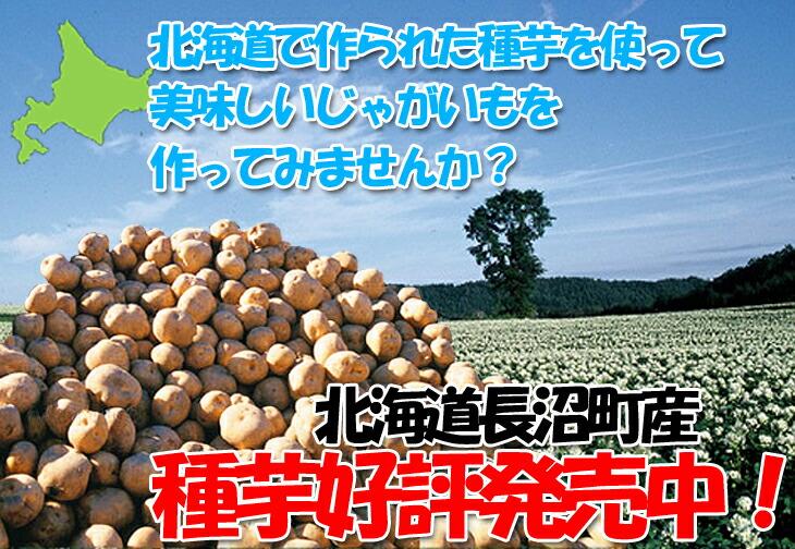 長沼町産種芋