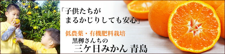 静岡 三ケ日みかん青島