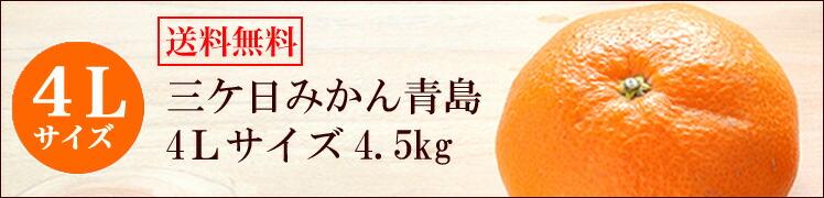 三ケ日みかん青島4L