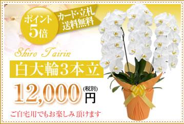 白大輪12000円