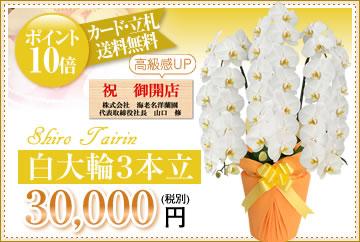 白大輪30000円
