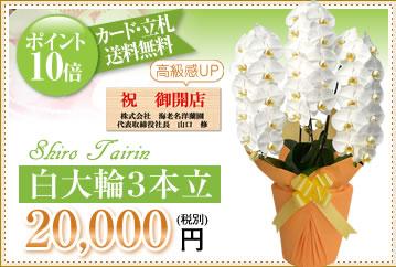 白大輪20000円
