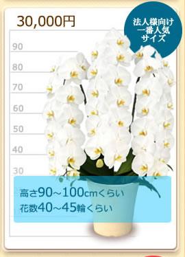 30000円の胡蝶蘭