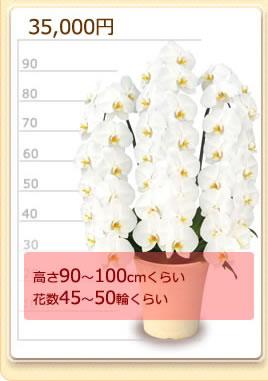 35000円の胡蝶蘭