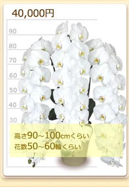 40000円の胡蝶蘭
