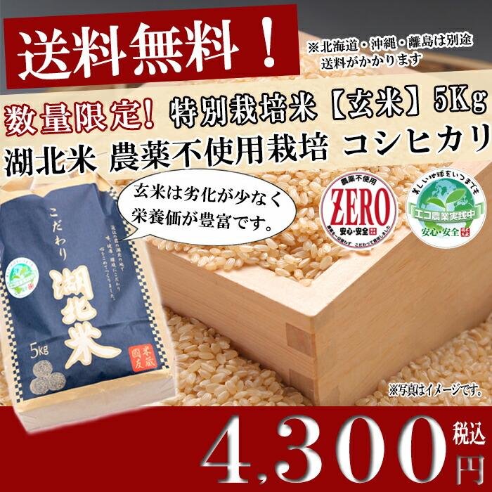 お米/湖北米 農薬不使用コシヒカリ ZERO【玄米】5kg 特別栽培米