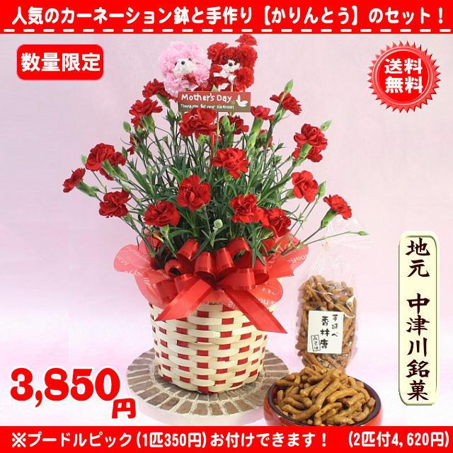 母の日■お菓子とお花のセット!赤カーネーション5号鉢【送料無料】