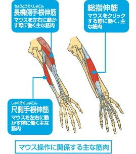 マウス操作に関係する主な筋肉