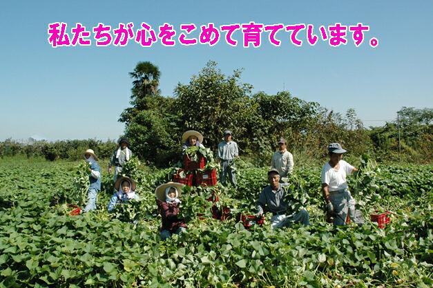 私たちが素材となる野菜をひとつひとつ手作り、有機栽培でお届けしています。おいしいケールを育てるよ。食べてや〜