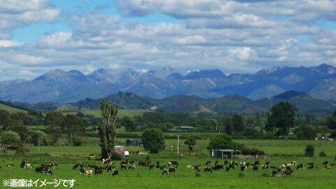 ニュージーランドの牧場 ※画像はイメージです