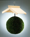 Cedar ball (cedar-leaf ball) 30 centimeters in diameter unvarnished wood shade set [nationwide]