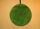 45 centimeters [nationwide] of cedar balls (cedar-leaf ball)