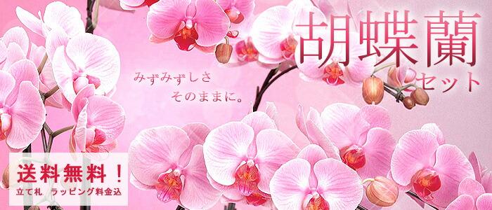 「電報屋のエクスメール」の胡蝶蘭セット