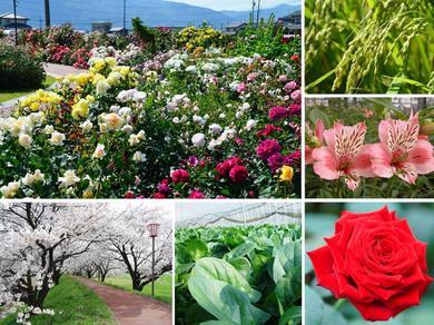 神戸町の自然