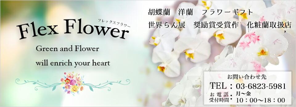 Flex Flower:胡蝶蘭(格安で激安な高級胡蝶蘭)・観葉植物販売☆フレックスフラワー