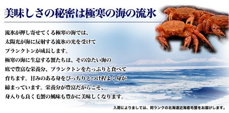 ck-kegani_03.jpg