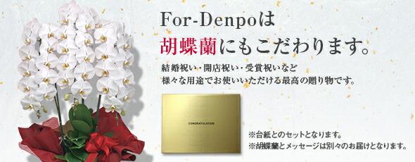 胡蝶蘭/電報ならFor-Denpo