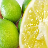 熊本県三角産中山さんのレモン1箱5kg入