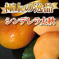 【九州熊本産】旬の新鮮こだわりの野菜詰め合わせBセット