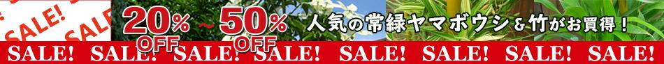 人気の常緑ヤマボウシ&竹(各種)がお買い得!20%〜50%セール開催中!