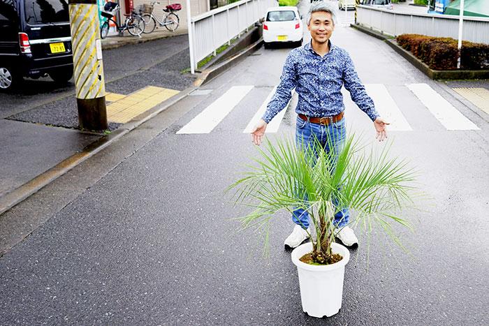 ココスヤシ 10号大株