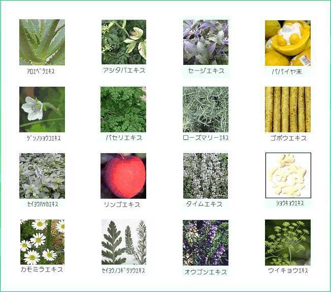 フェロモンボディー 16種類のハーブエキス