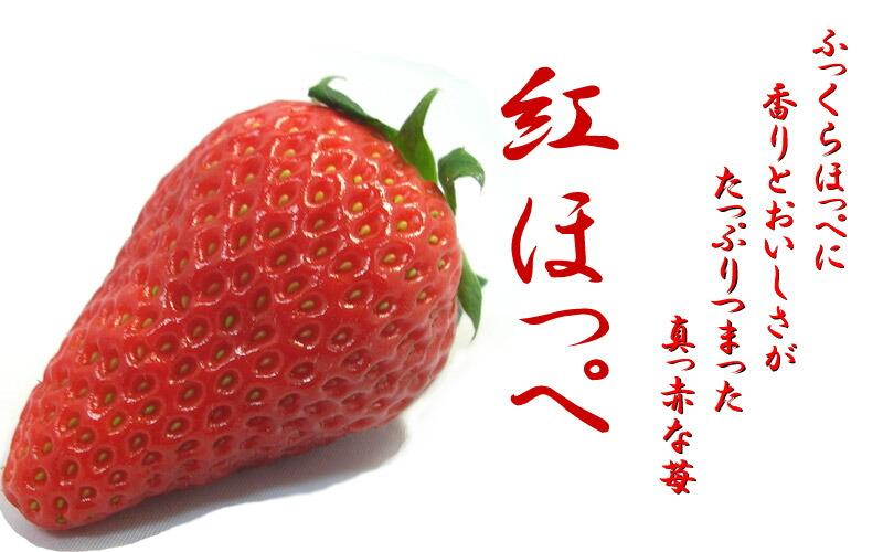 「紅ほっぺ」の画像検索結果