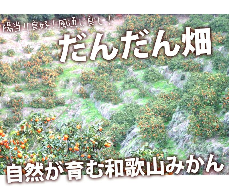 和歌山のだんだん畑、この最高のロケーションが濃厚な味を生む。