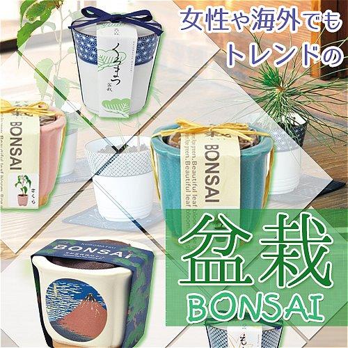 盆栽 BONSAI 苔 コケ