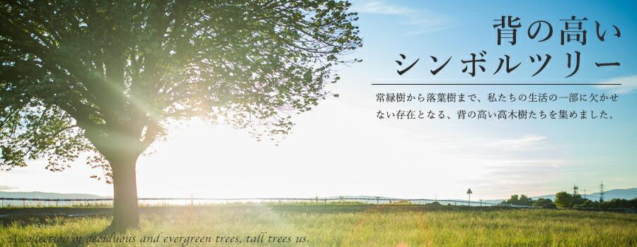背の高いシンボルツリー