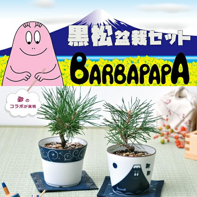 バーバパパ 黒松盆栽