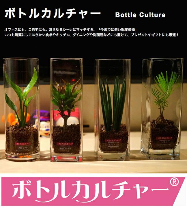 ボトルカルチャー 観葉植物