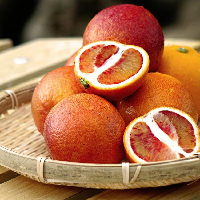 オレンジ 苗