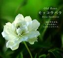 White モッコウバラ Yaesu ( old rose) white robust rose # 5 pot seedling roses