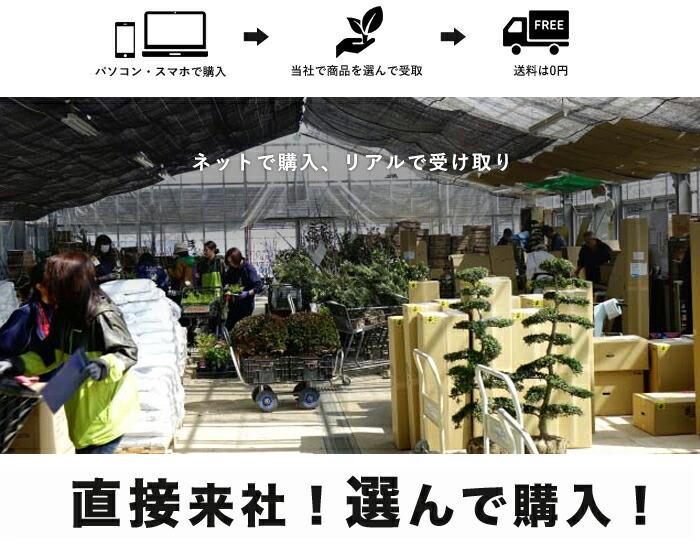 愛知、岐阜、三重の東海三県や滋賀県から花ひろばへお越しのお客様へ