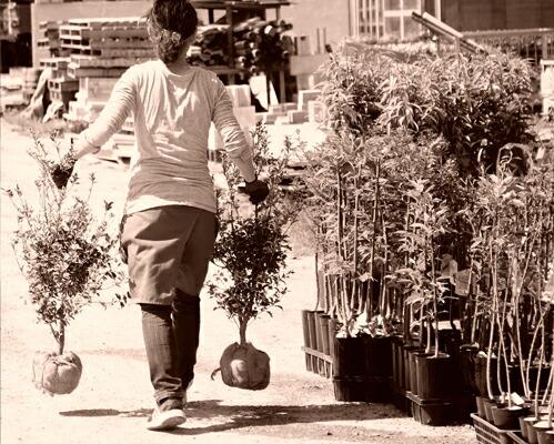 たくさんの植物からお好みの樹形の苗をお選びいただけます