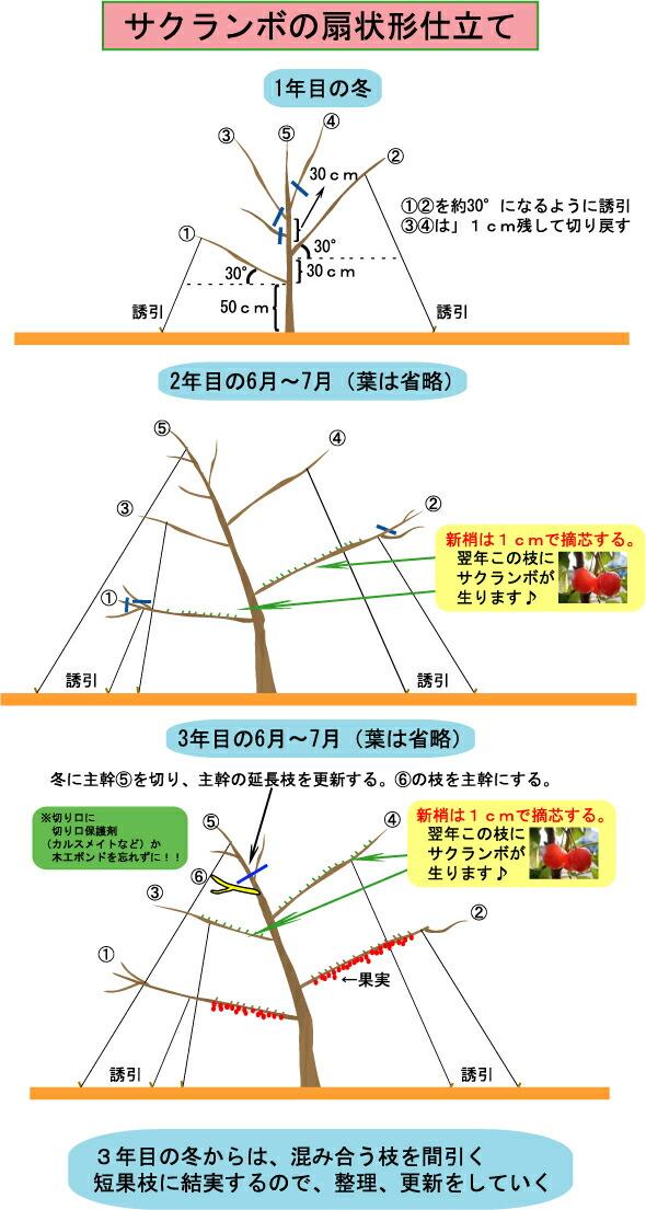 樱桃树嫁接方法图解