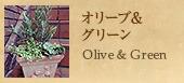 オリーブ&グリーン