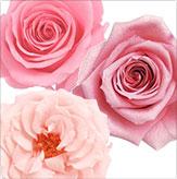 ピンク系ローズ